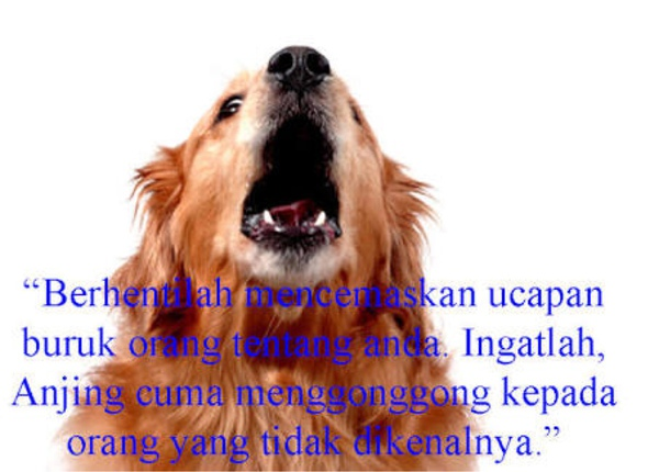 16+ Anjing menggonggong quotes terupdate