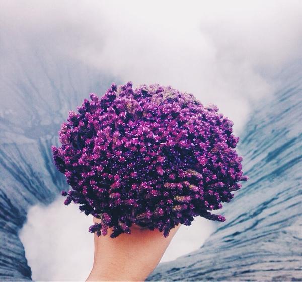 Kak Boleh Bagi Pap Bunga Edelweis Ungu Yg Pernah Di Jadiin