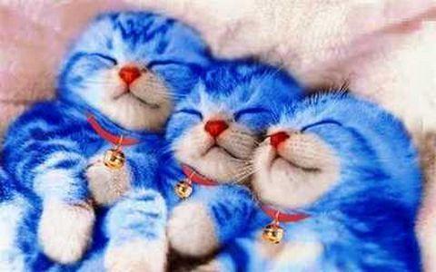 Kucing Lucu Sedunia Majalah Cat Dog