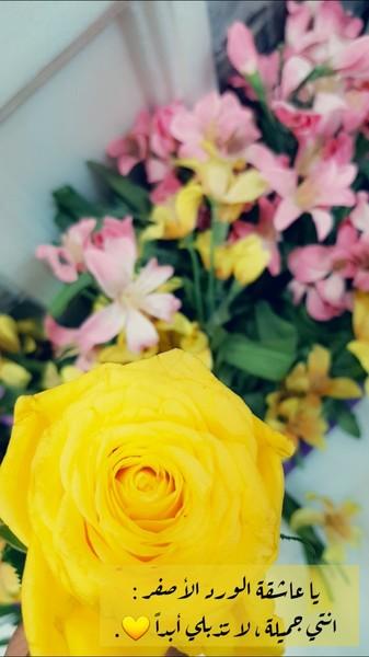 كلام حب عن الورد الاصفر Aiqtabas Blog